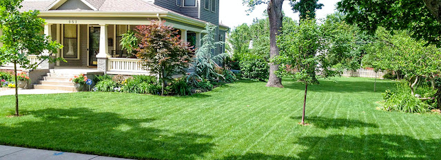 Important Facts to Consider Before You Plan For Artificial Grass Landscaping