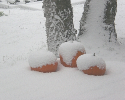 Frost Snow On The Pumpkins.