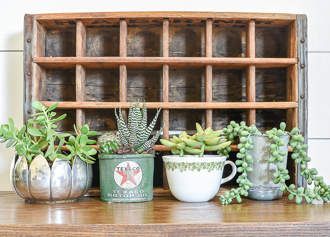 Vintage Inspired Succulent Planters Tips For Proper Care Little House Of Four Creating A Beautiful Home One Thrifty Project At A Time Vintage Inspired Succulent Planters Tips For