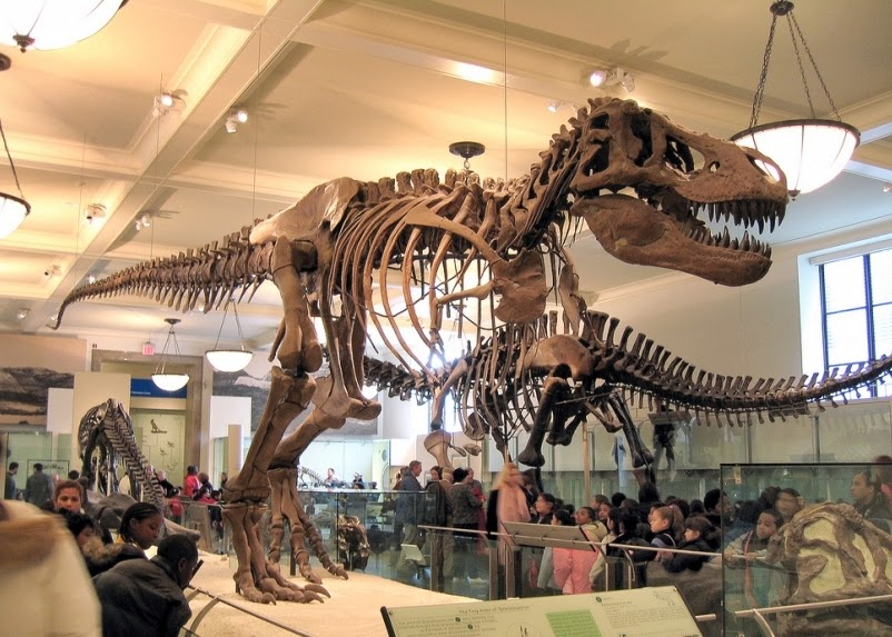O que ver no quarto andar do Museu de História Natural em Nova York