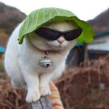 images de chatons trop mignon - Images de chat trop mignon 3 YouTube