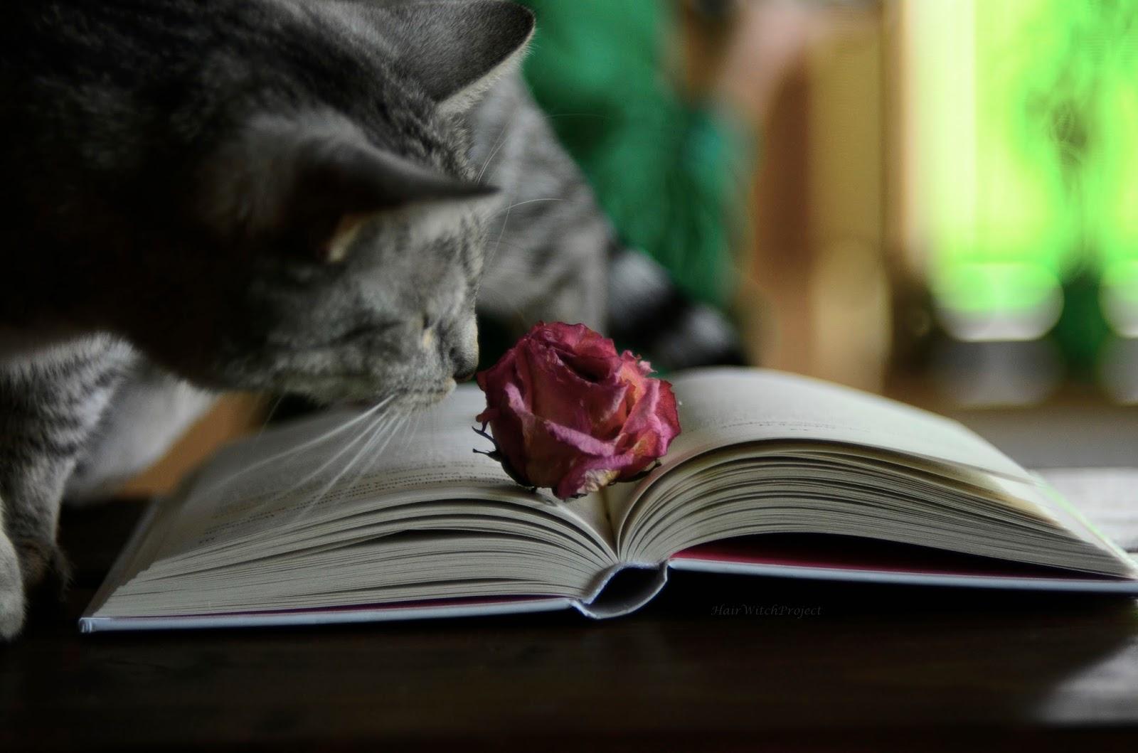 książka | #instaserial o miłości | recenzja | lifestyle | kot