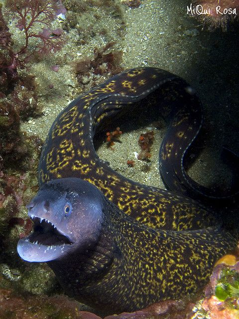 Peixes e Criaturas Marinhas