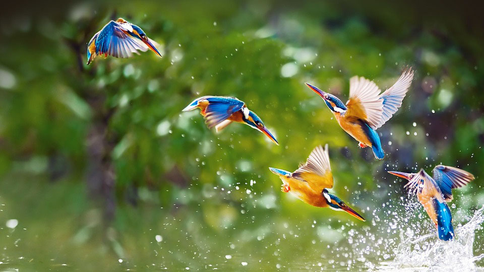 fly birds images