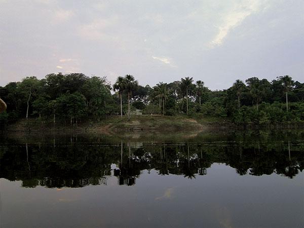 Dia da Amazônia: conheça a floresta