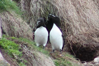 Razorbill and Razorbob Hang Out.