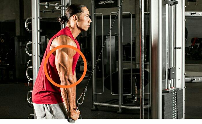 Triceps prass-dwon