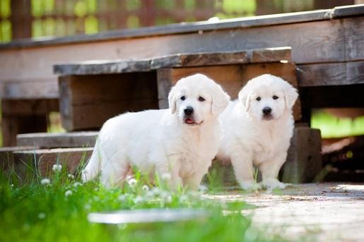 Karmy dla psów z problemami nerkowymi
