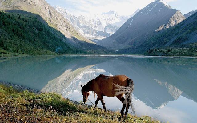 Bruin paard bij een groot meer met bergen op de achtergrond