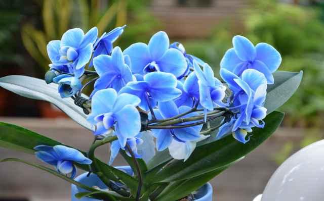 Os Melhores Sites Sobre Orquídeas