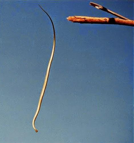 http://4.bp.blogspot.com/-Oyt4S3Ny6Jo/VSdmtY0C_pI/AAAAAAAAJ20/Sn-nw2_VrJo/s1600/ular-terbang-3.jpg
