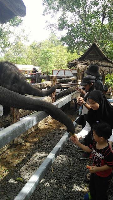 hatyai, jalan-jalan Hatyai, chnag puak camp, gajah, elephant camp at hatyai, Hatyai elephant camp, elephant camp, kem gajah, peta ke chang puak camp, elephant riding, naik gajah di hatyai, tempat menarik di Hatyai, Hatyai best place, must visit at hatyai, chang puak elephant camp, visit thailand, visit hatyai,