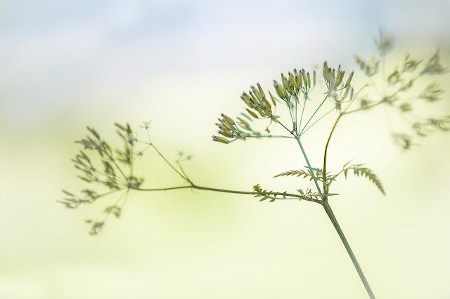 goldandgreen-astuces-minimalisme-challenge