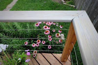 deck stain refinish replace redo gray Cabot coneflower
