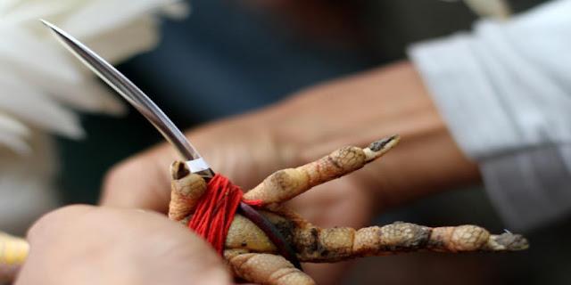 Tradisi Jawa
