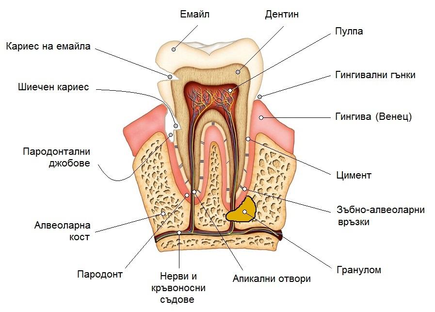 Лечение на гранулом