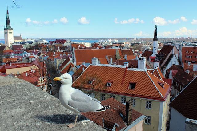 tallin+2+giorni+estonia