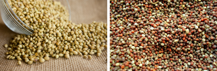 Coriander Seeds and Mustard Seeds