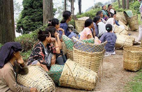 Joint forum Darjeeling tea
