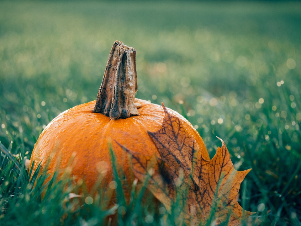 Ripe pumpkin in the middle of green grass