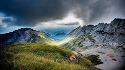 Ibex at Mount Pilatus 4K