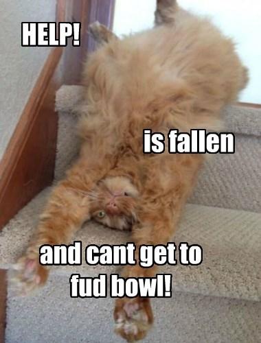 Help! I am Fallen, funny cat meme