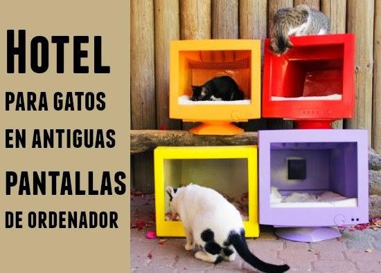 Hotel para Gatos con Pantallas de Ordenador antiguas