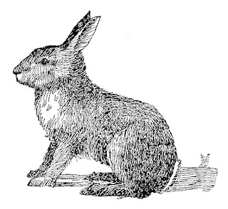 rabbit stock illustration digital download