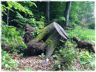 So ein großer Baumstamm