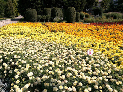 Разноцветный ковер из цветов ботанического сада Балчик