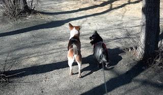 дружба собак