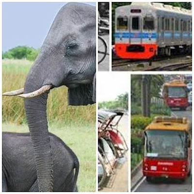 Transportasi Bandar Lampung ke Way Kambas