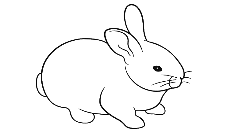 Belajar Mewarnai Hewan Kelinci Besthanukkahgiftsco