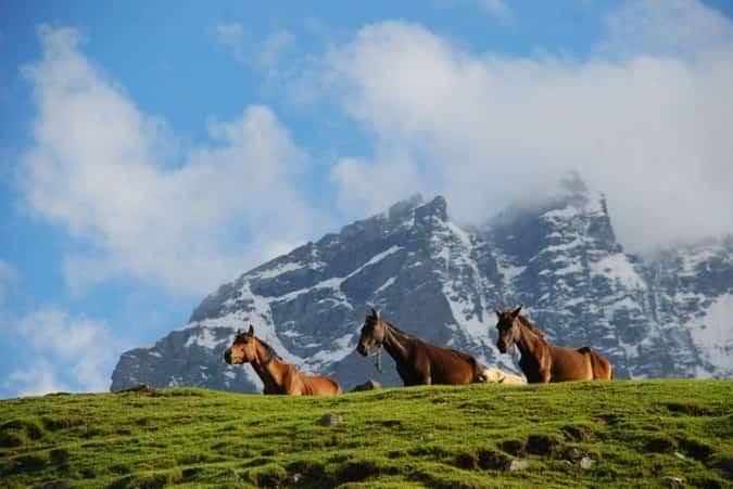 Horses Grazing, Sonamarg
