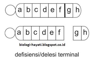 Delesi terminal