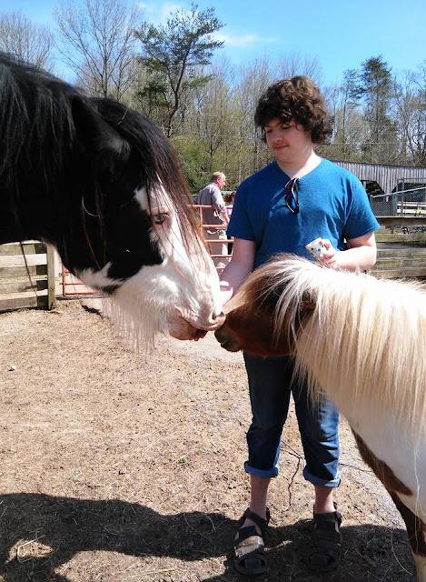 Things to do in Kentucky: Kentucky Down Under Petting Zoo