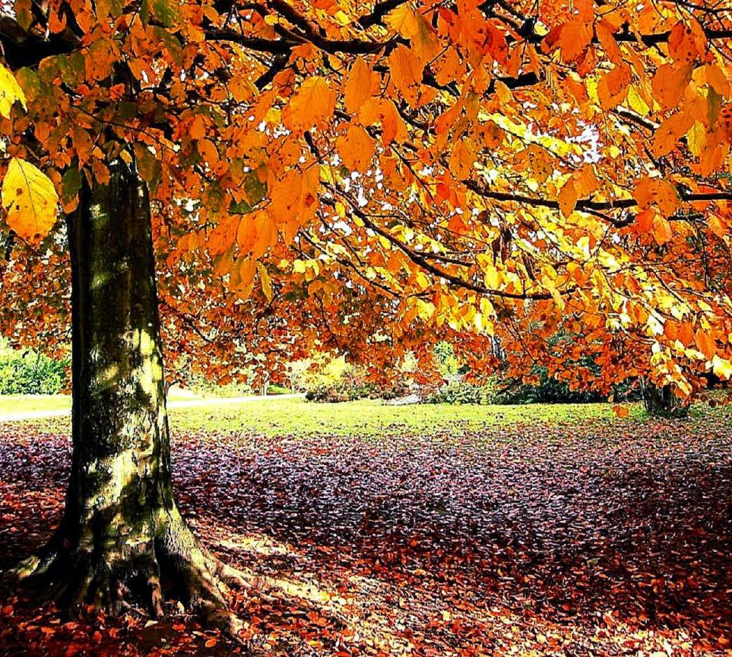 Autumn Tree Nature