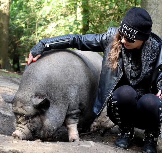 ganz viel Schweineliebe