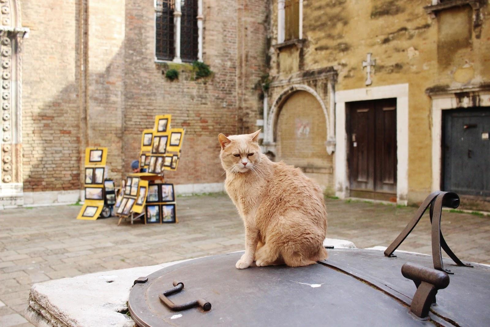 gato italiano
