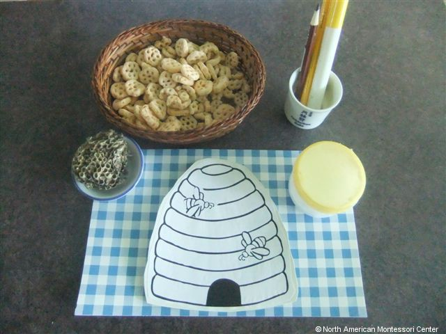 NAMC montessori preschool classroom studying honeybees paper honeycomb
