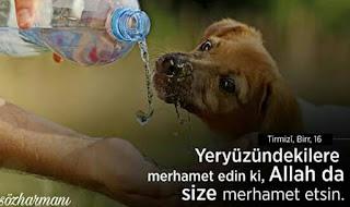 hayvanlarla ilgili hadisi şerif, hz muhammed, hayvan sevgisi ile ilgili sözler, resimli mesajlar, resimli sözler, merhamet ile ilgili sözler, hayvanlarla ile güzel sözler, altın sözler, hayvan sevgisi sözleri kısa