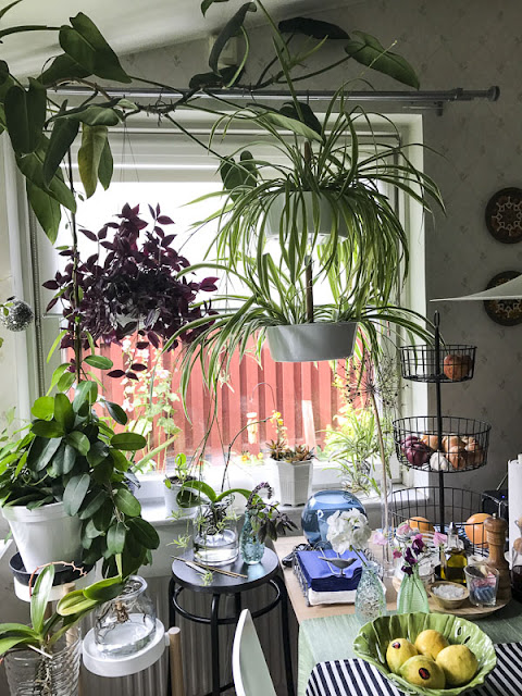 köksfönster, kitchenwindow, plants, krukväxter