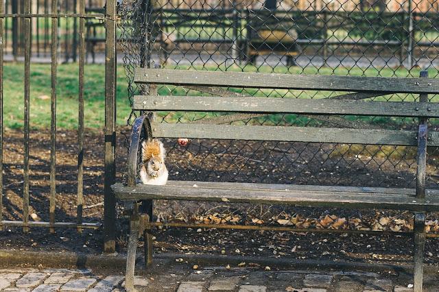 トンプキンズ・スクエア・パーク(Tompkins Square Park)