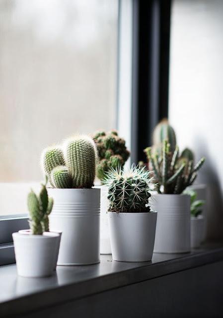 cactos-na-decoracao-blog-abrir-janela