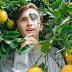 Il limone, un prodotto multitasking.....curiosità e info.