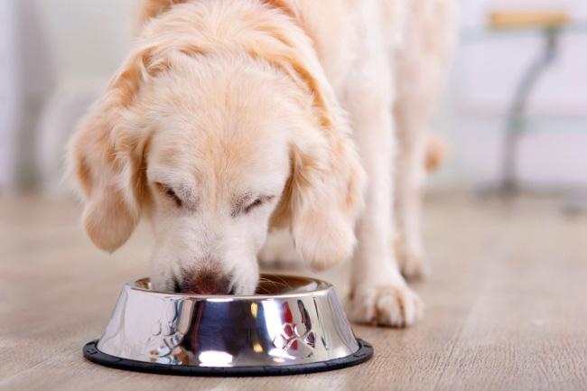 Karmy holistyczne dla psów