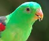 all essay short essay on parrot words  the parrot is a very beautiful bird its feathers are green it has a red beak its beak is curved round the neck of a parrot there are black rings