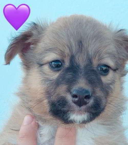cachorras-talla-pequena-3