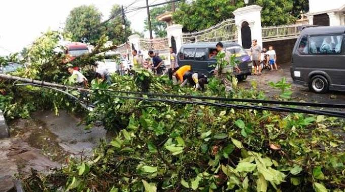 BANTEN : Kota Pandeglang Dilanda Hujan Lebat dan Angin Kencang Akibatkan Pohon Bertumbangan