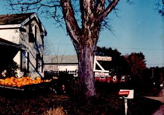 Shagbark Hickory at Hickory Hurst Farm, 1979